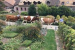 14h50 défilé des 5 Vaches et Cor des Alpes